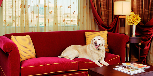 Kimpton Hotels - Bark and Bath